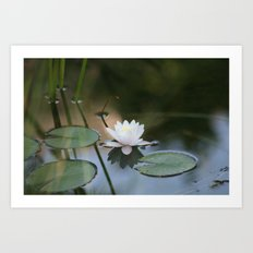 Water Lily 2 Art Print