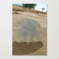 Sandy Dollar Canvas Print