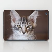 Kitten portrait 2596 iPad Case