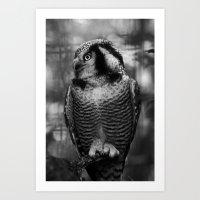 Owl series no.1 Art Print