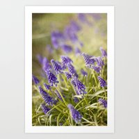 Violet Dreams Art Print