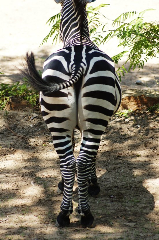 Do These Stripes Make My Butt Look Big? Art Print