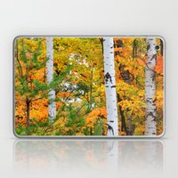Birch Trees and Autumn Colors Laptop & iPad Skin