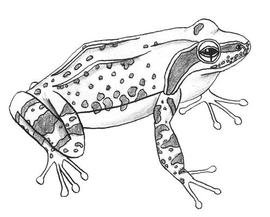 Little frog Art Print