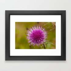 Thistle flower 6389 Framed Art Print