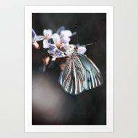 butterfly #2 Art Print