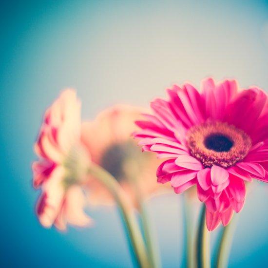 Deeper Down, Pink Flower on Blue  Art Print