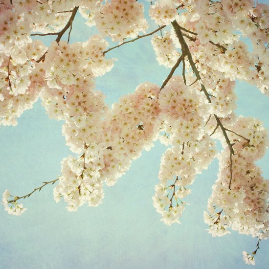 Blue Sky and Blossoms Art Print