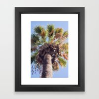 Palm Washingtonia 4099 Framed Art Print