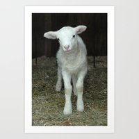 Newborn Lamb Art Print