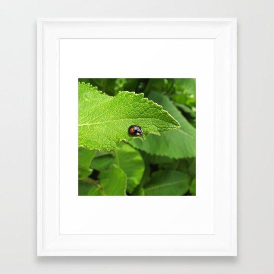 black ladybug I Framed Art Print