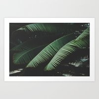 Night in the Tropics Art Print