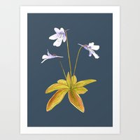 Butterwort - Pinguicula … Art Print