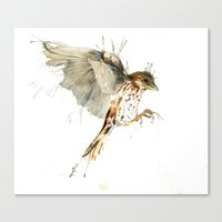 My Sparrow Canvas Print