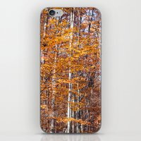 Golden Brown Leaves iPhone & iPod Skin