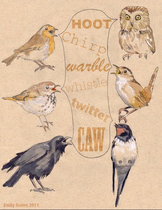 Bird Sounds Canvas Print