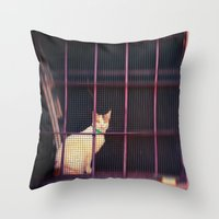 Kitty Looking At Me Throw Pillow