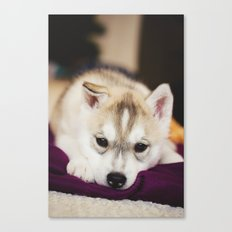 husky puppy. Canvas Print