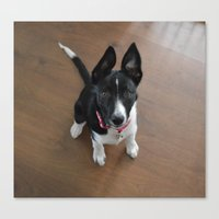 Little Doggy Canvas Print