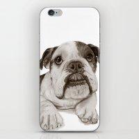 A Bulldog Puppy :: Brindle  iPhone & iPod Skin