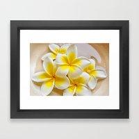 Plumeria Blossoms Framed Art Print