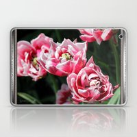 Double Late Peony-Flowered Tulip named Horizon Laptop & iPad Skin