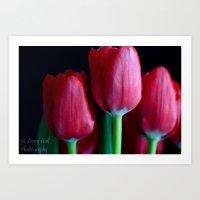 Silky Smooth Tulips  Art Print