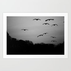 Grey Goose Flight Art Print