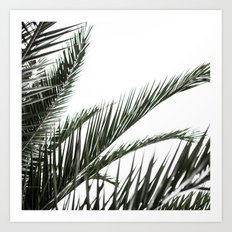 Palm Leaves 2 Art Print