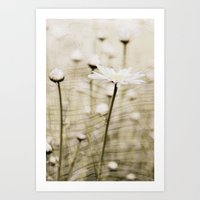 Daisy Fields 4eva Art Print