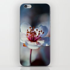 Spring Blossom iPhone & iPod Skin