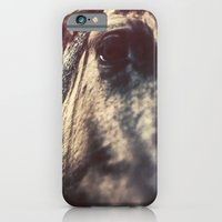 iPhone & iPod Case featuring HORSE by jmdphoto