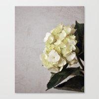 Baby Hydrangeas and Grey Canvas Print