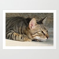 Thoughtful Tabby Cat Art Print