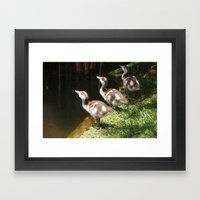 Three Little Ducklings Framed Art Print