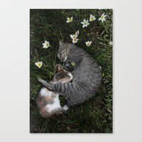 Sleep [A CAT AND A KITTE… Canvas Print