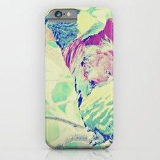 Colorful Bird Dreams  iPhone 6 Slim Case