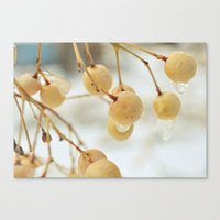 Frozen Canvas Print