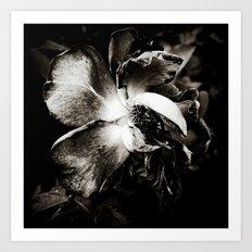 Night of the Living Dead Rose Art Print