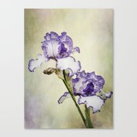 Iris Ripple Canvas Print
