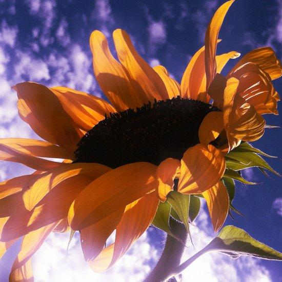 FLOWER 039 Art Print