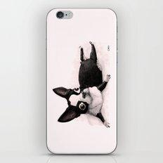 The Little Fat Boston Terrier iPhone & iPod Skin