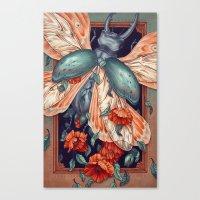 Moth Beetle Canvas Print