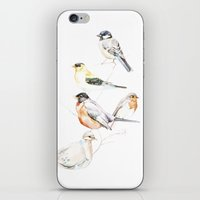 Birds of the Midwest iPhone & iPod Skin