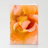 Orange ,Rosa Rose Stationery Cards