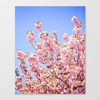Pink Cherry Blossoms Against Blue Sky Canvas Print
