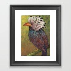 White Crested Hornbill Framed Art Print
