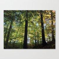 DEEP WOODS FALL SUNRISE (Crescent Trail, Fairport, NY) Canvas Print