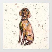 Hungarian Vizsla Dog Pup… Canvas Print