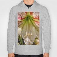 Beautiful Amaryllis Hipp… Hoody